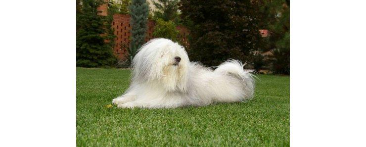 Одис (Одесская домашняя идеальная собака) / ODIS