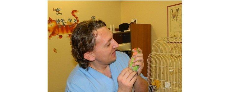 Первая ветеринарная помощь птицам